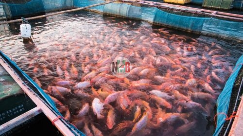 The Secret Behind Fish Farming in Kenya