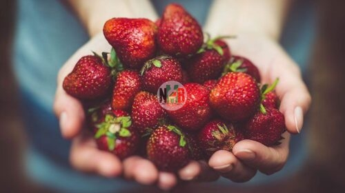 Get Rich Through Strawberry Farming.