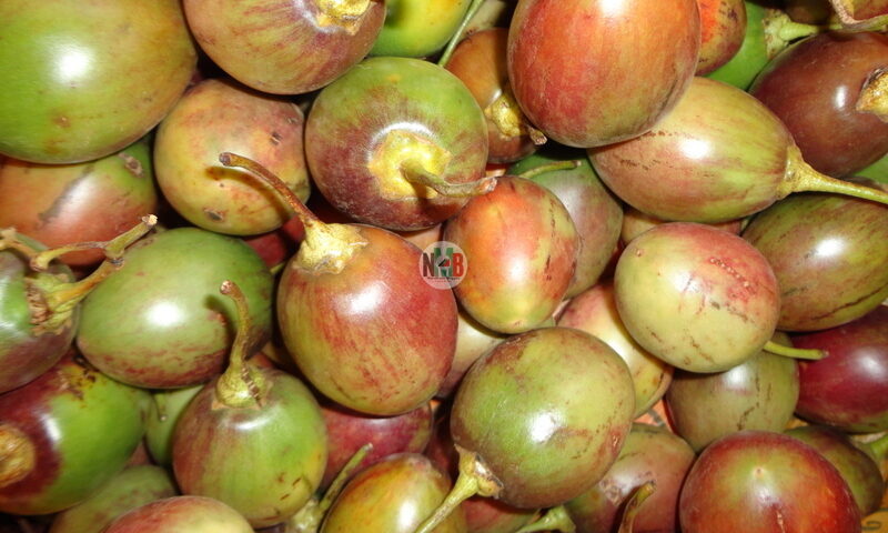 How Lucrative is Tree Tomato Farming in Kenya?