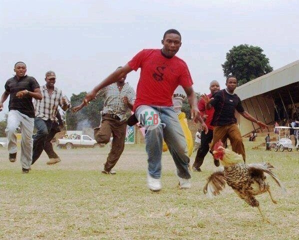 How To Steal a Chicken In Kenya